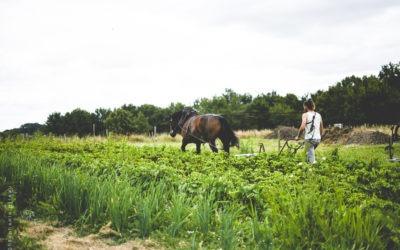 Matthieu et Orkydée, la complicité homme-cheval